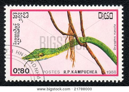 The Long Nosed Tree Snake