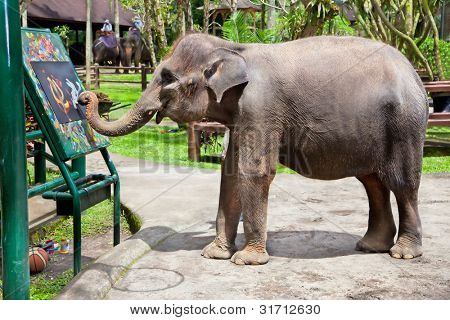 Artistic  Elephant drawing a picture on elephants show, Bali, Indonesia