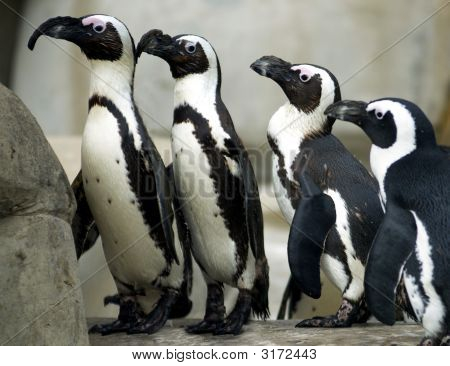 Penguins In A Line
