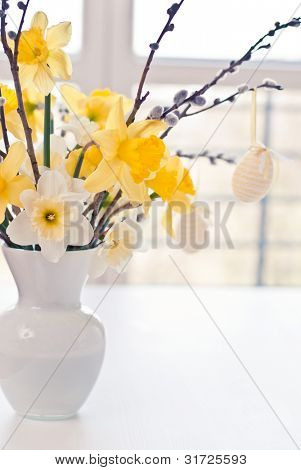 Narcissus spring flower
