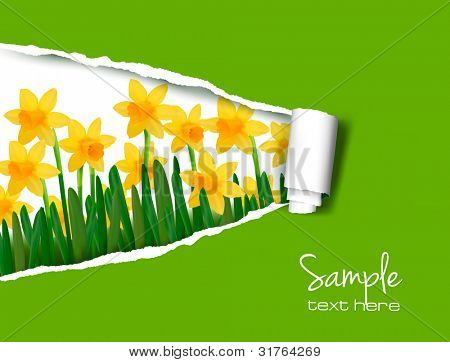 Spring flower background with ripped paper. Vector illustration.
