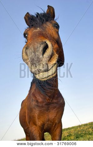 Horse with a sense of humor.