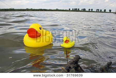 Rubber Duckies floating on water