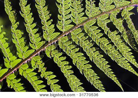 fresh green fern leafs in the forest