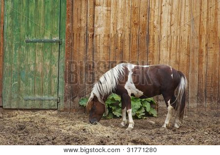 Horse In The Homestead