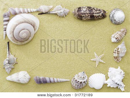 Starfish and seashells frame