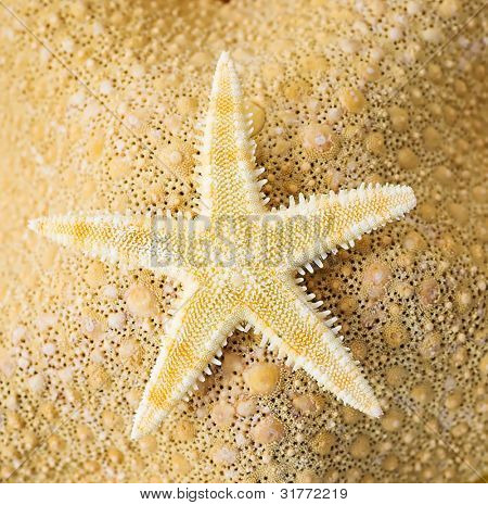 Seaside Assortment. Starfish