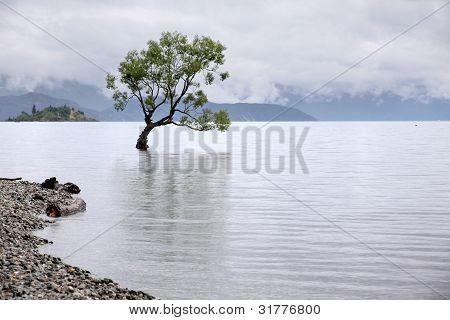 Tree In The Lake Wanaka