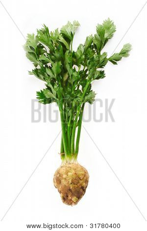 Fresh green celery vegetable on white background