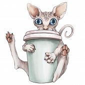 The Bald Pink Sphinx Cat Is Drinking Coffee. Good Morning .cg Illustration. Isolated On White Backgr poster