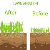 Lawn Stage Aeration Illustration. Gardening Of Lawns, Landscape Design Services. Vector On White Bac poster