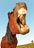 pic of western saddle  - Horse with a sense of humor - JPG