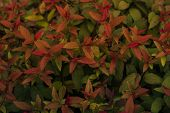 Green And Red Leaves. Green Leaves Background Texture. Creative Layout Made Of Red Leaves. Flat Lay. poster