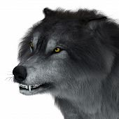 Dire Wolf Head 3d Illustration - The Carnivorous Dire Wolf Lived In North And South America During T poster