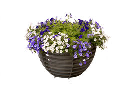 pic of flower pot  - flowers in pot isolated on white background - JPG
