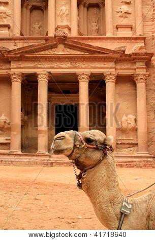 Siting Cammel And The Treasury At Petra, Lost Rock City Of Jordan.