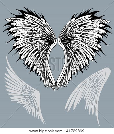 Wings Feathered