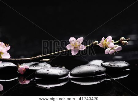 zen stones with cherry blossom