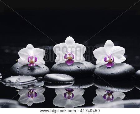 Three white orchid flower and stones in water drops
