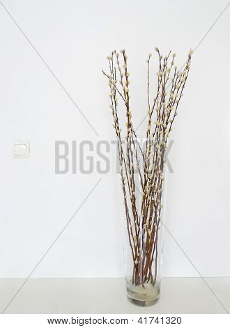 Pussy Willows Vase