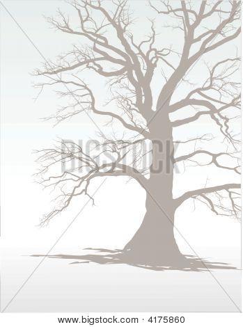 Tree In Winter Fog 1