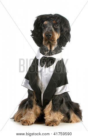 schöner Hund - english Cocker Spaniel, gekleidet in Smoking sitzend isoliert auf weißem Hintergrund