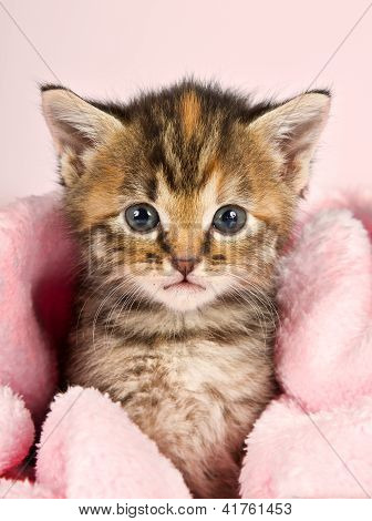 Small Kitten Wrapped In Pink Banket