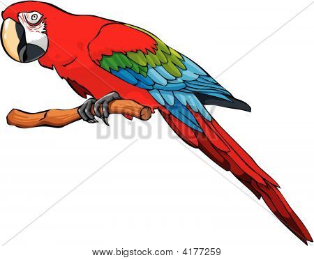 Bright Colored Parrot