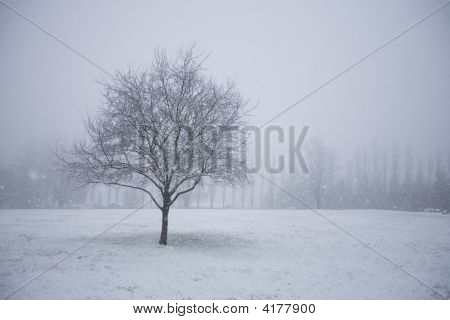 Snowy Tree In An Empty Field