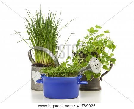 Chives planted in watering can, garden cress in casserole, lemon balm in pewter jug on white background