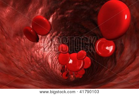 Blood Cells In A Vein