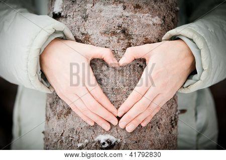 Tree lover