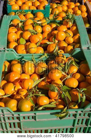 Orange tangerine fruits in harvest basket boxes in a row