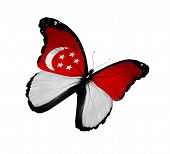 Singaporean Flag Butterfly Flying, Isolated On White Background