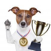 stock photo of superstars  - champion winning dog with a gold medal - JPG