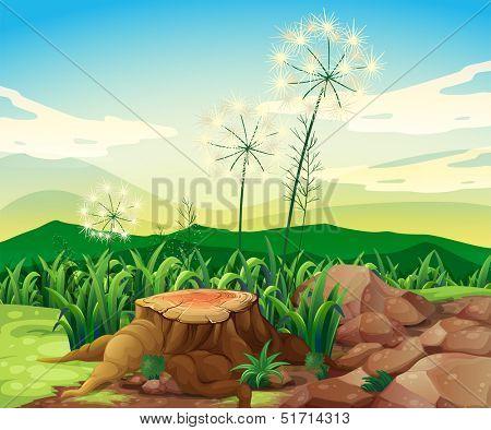 Illustration of a stump near the rocks