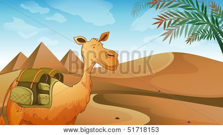 Illustration of a camel at the desert