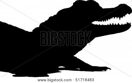 American Alligator 2.eps