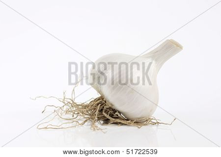 Garlic With Root