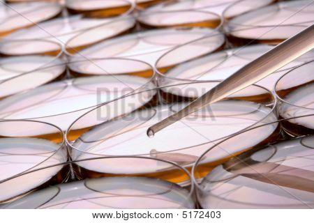 Petri Dish In Science Research Lab