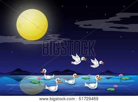 Illustration of the ducks at the pond in a moonlight scenery