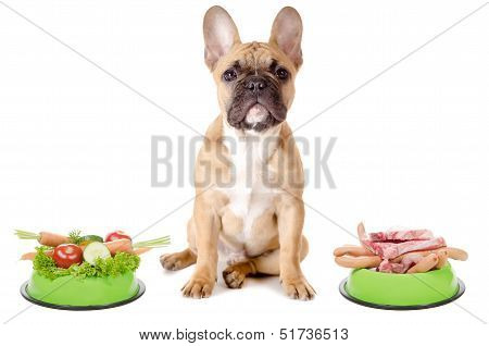 Vegetables Or Meat For The Dog