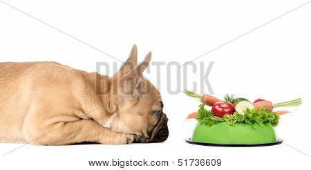Dog With A Feeding Bowl Full Of Vegetables