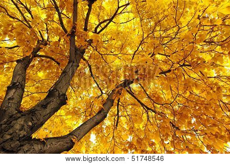 Under big autumn tree. Nature composition.