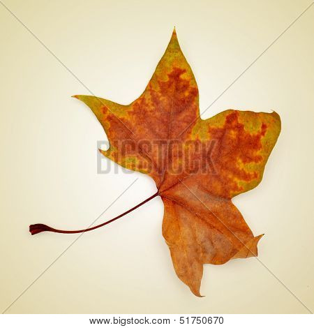 picture of a dried leaf in autumn on a beige background with a retro effect