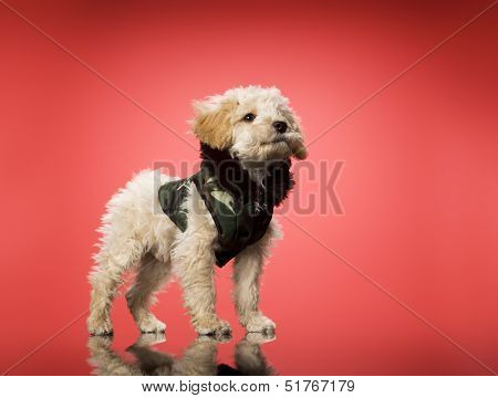 Sweet dog with modern clothes