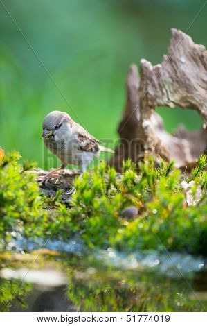 Single sparrow in nature at lake