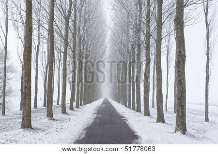 Bike Path Between Frosted Tree Rows In Fog