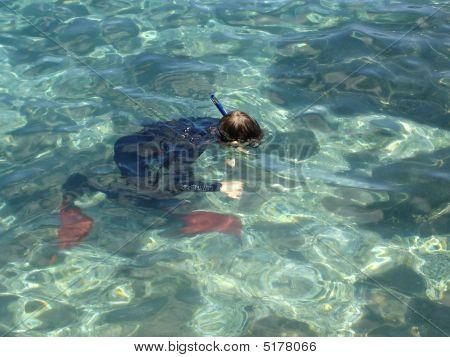 Tropical Snorkel