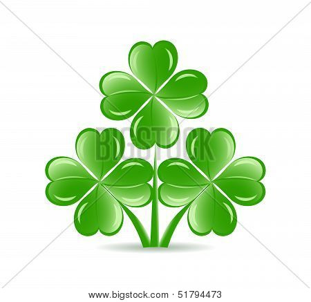Vector Illustration Of The Three  Shamrocks With Four Lucky Leaves Isolated On White Background.  St